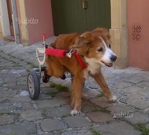 Carrellino per cani taglia medio grande posot class for Cassa parto cani usata