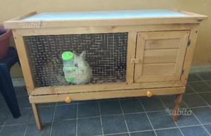 Gabbia in legno e 2 conigli nani
