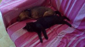 Regalo gattina nera