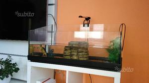 Tartaruga d acqua di due anni piú acquario