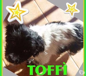 Una mamma per Toffy