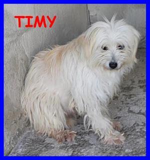 LEI è Timy