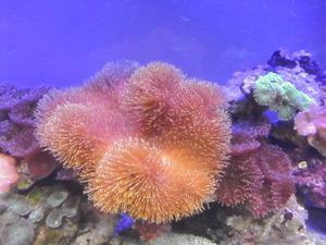 ALLESTIMENTO acquario marino