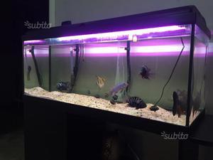 Arredi per acquario professionali posot class for Acquario 120 litri