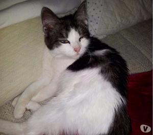 Regalo gattina 4 mesi