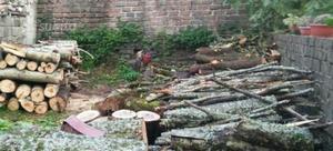 Legna di quercia e castagno