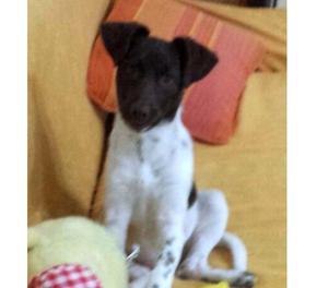 Madì cucciola 4 mesi cerca casa