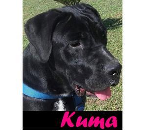 meravigliosa Kuma aspetta una famiglia