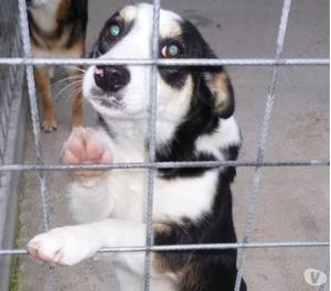 Iride, dolce cagnolina in cerca di una famiglia