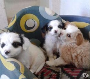 Tre cuccioline di due mesi e mezzo