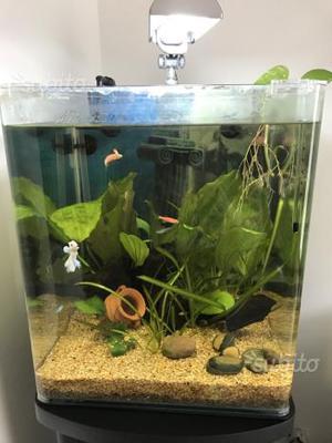 Acquario dennerle nano cube 60 lt accessori posot class for Acquario bianco usato