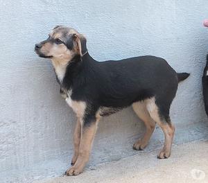 PONGO, Cucciolo di 5 mesi, simpatico e curioso...cerca casa!