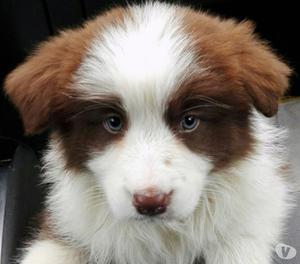 splendida cucciola di 3 mesi