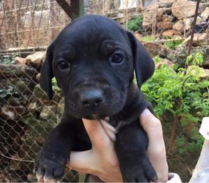 6 cuccioli futura taglia media in adozione