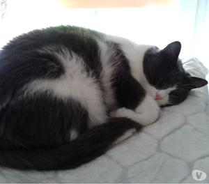 Pensione domestica per gatti e cani piccola taglia