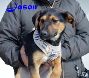 il cucciolo Jason Aspetta una famiglia