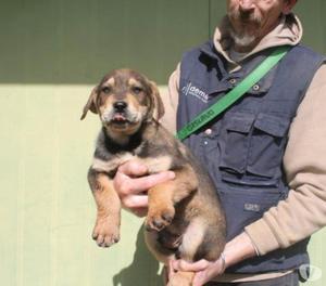 Cesare cucciolo due mesi e mezzo tg medio grande