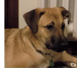 Do in adozione un cucciolo machio di 6 mesi
