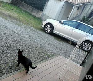 smarrito gatto nero occhi verdi
