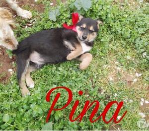 Pina e Patty taglia medio piccola