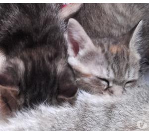 Regalo 5 gattini di 50 giorni