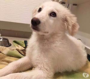 Zeus cucciolo 3 mesi