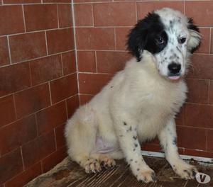 Mika, cucciola 5 mesi in adozione