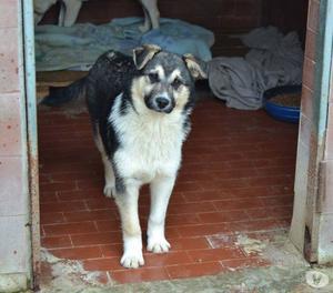 Ozzy, 5 mesi taglia medio piccola in adozione