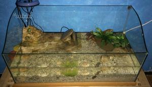 Acquaterrario completo e nuovo per tartarughe posot class for Lampada tartarughiera