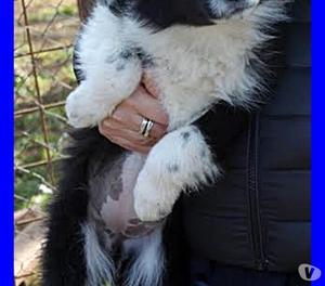 AVENA bellissima cucciola 3 mesi buttata in un giardino