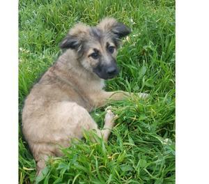 Orsetto allegro cucciolo 3 mesi cerca famiglia per la vita