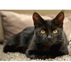 Regalo dolcissimo gattino nero