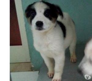 Sasha cucciola 4 mesi in attesa di famiglia