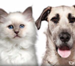 servizi funebri animali domestici