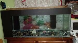 Acquario l solo vasca torino posot class for Acquario 250 litri