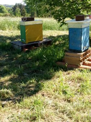 Famiglie/Nuclei di api con regina ligustica