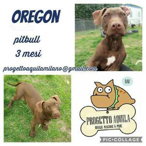 Oregon, pit red nose