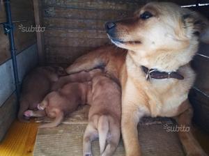 Regalo cuccioli taglia piccola