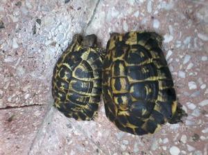 Laghetto per tartarughe posot class for Acquario tartarughe prezzo