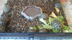 Tartarughe di circa due anni