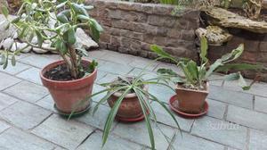 cerco piante da giardino in regalo firenze posot class
