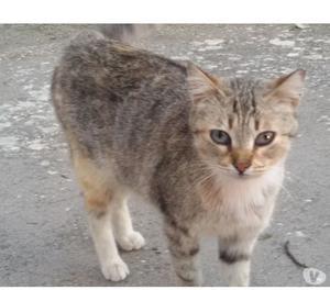 regalo gattina sterilizzata