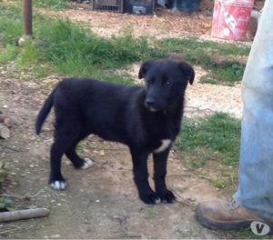 Cucciola di tre mesi da adottare