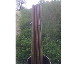 Canne di bamboo pordenone posot class for Canne di bamboo da arredo