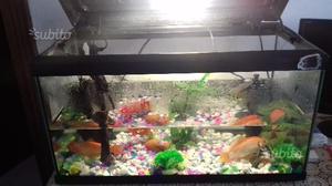 Acqaurio per pesci