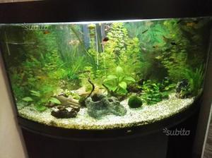 Acquario 350 litri posot class for Acquario 250 litri