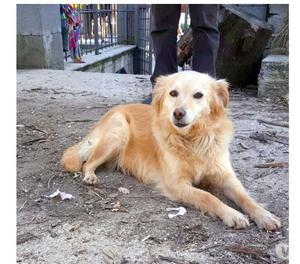 Adozione del cuore per Nina cagnolina taglia medio piccola