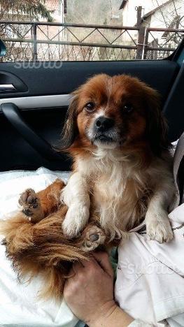 Cagnolino di tre anni in adozione