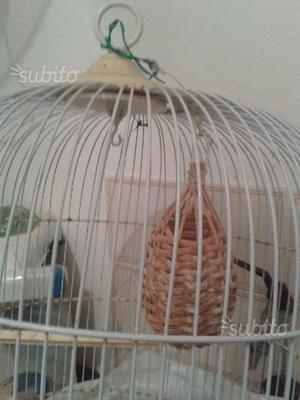 Gabbia per canarini o altri uccelli