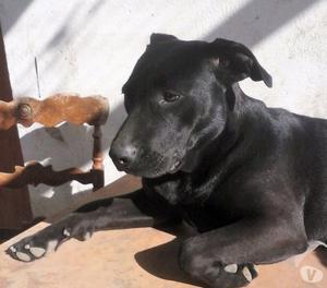 Rosalie, cane, 1 anno, taglia medio grande